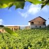 Casa Valduga é um dos melhores destinos de enoturismo do Brasil e Uruguai