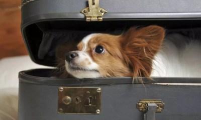 Dicas na hora de viajar com seu pet