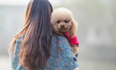 Dicas de cuidado com os pets no outono e inverno