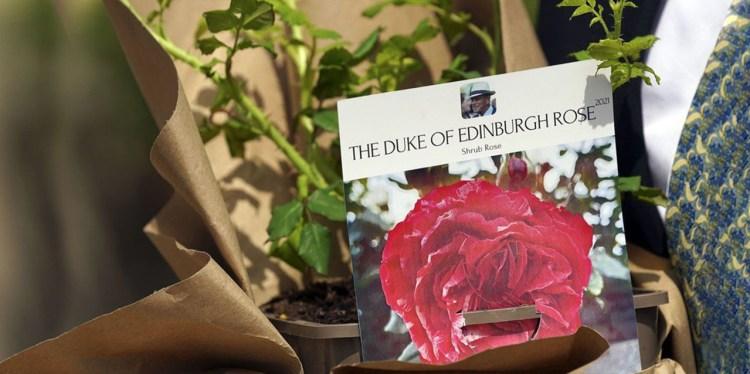Rosa de Edimburgo