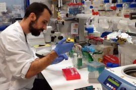 identifican un gen esencial para la supervivencia de las plantas