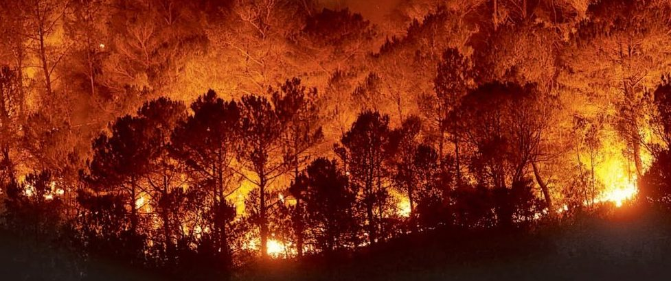 una propuesta para la detección de incendios forestales se alza con el premio de #aceleradoradeideas