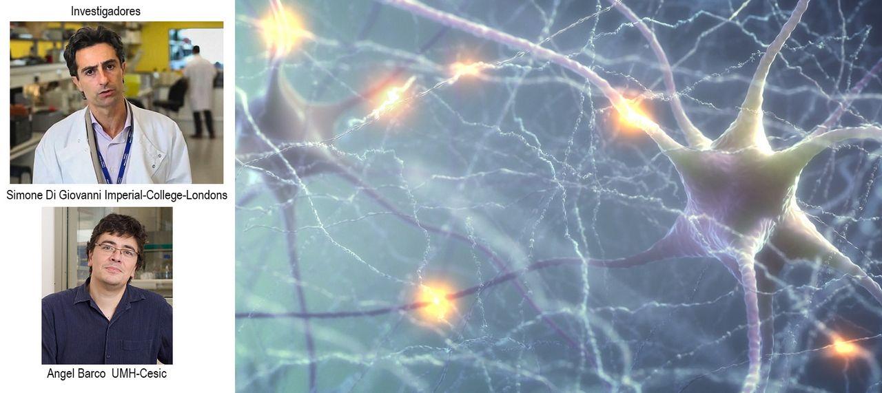 la actividad física prepara a las neuronas para regenerarse en caso de lesión medular