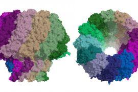 irb, proteína para infección por virus de epstein-barr