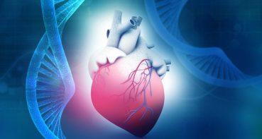 una terapia génica mejora múltiples enfermedades asociadas a la edad