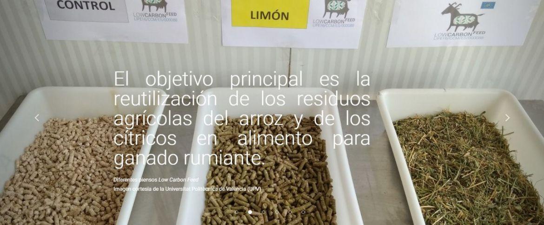 upv -desarrollan nuevos piensos para rumiantes basados en paja de arroz y hojas de cítricos