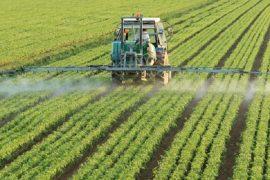 uma, nuevo modelo para el desarrollo racional de fungicidas