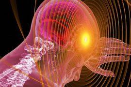 umh – csic, neutralizar un cáncer cerebral en un modelo de ratón
