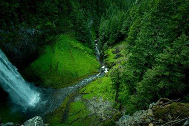 csic , los bosques retienen el carbono cada vez durante menos tiempo