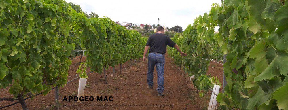 ulpgc proyecto para mejorar la capacidad vitícola de la macaronesia