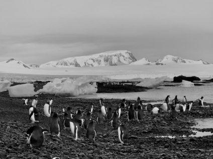 upc investiga la contaminación acústica de los océanos desde la antártida