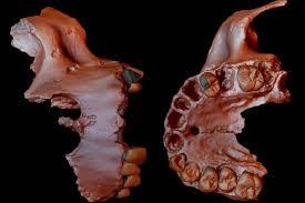 genética humana más antigua