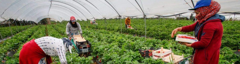 la comisión europea insta a adoptar medidas para proteger a los trabajadores de temporada