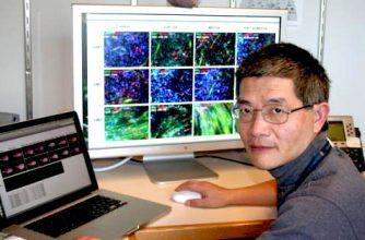 cnio, descubren una tecnología rápida y sencilla para conseguir células madre