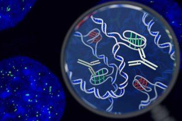 ADN con mas detalle