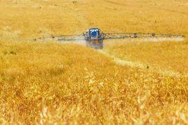 pesticida natural logra eliminar plagas y patógenos