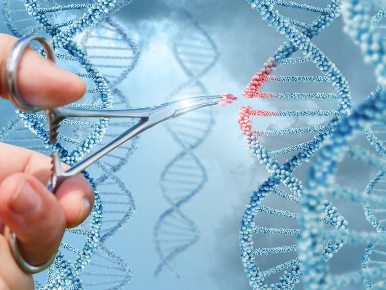 embriones modificados genéticamente fines terapéuticos