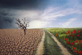 día internacional contra el cambio climático,