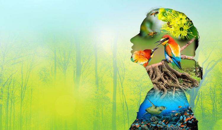 upc la biodiversidad del planeta