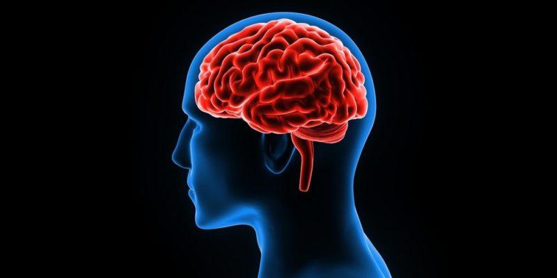 las turbulencias del cerebro humano y su funcionalidad