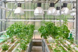 csic, mejorar la producción agrícola