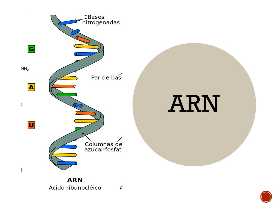 harvard inmersión en la realidad del arn de las células