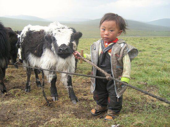 mongolia nino