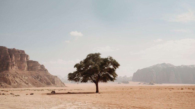 Diez buenas noticias sobre desertizacion4