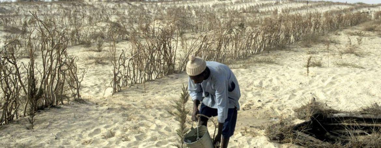 Diez buenas noticias sobre desertizacion6