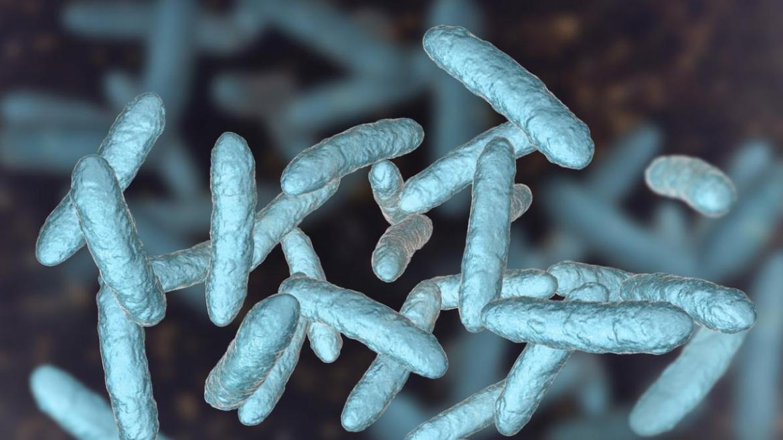 Microbiomas Intestinales antiguos jpg2
