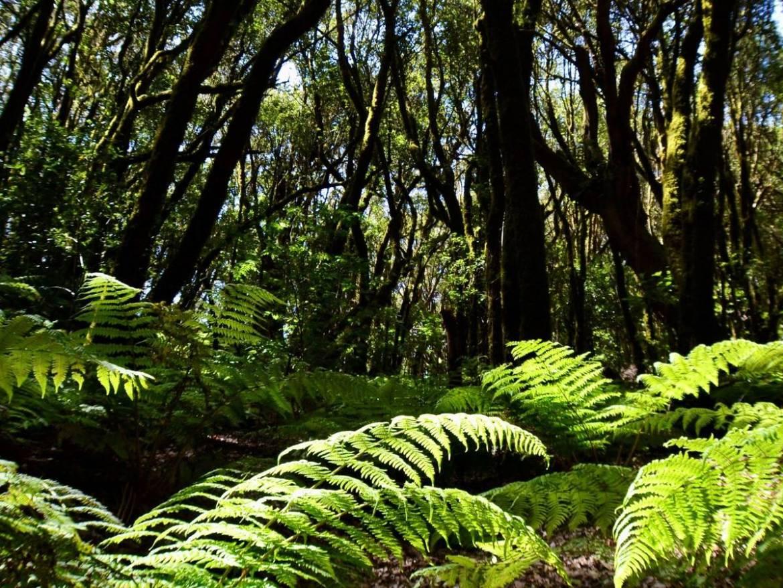 bosques mas jovenes y bajos consecuencias de la tala masiva y del cambio climatico