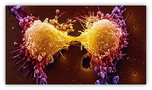 En busca de nuevas dianas para tratar el cancer3