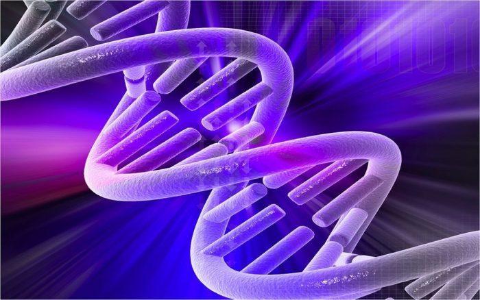 Origenes de la mutacion revela variaciones geneticas PRINCI