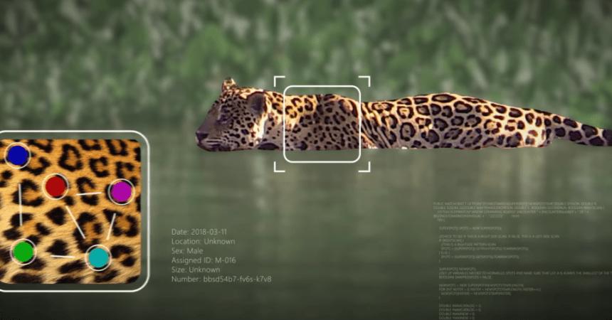 Microsoft y Wild Me: preservación de la vida animal a través de la Inteligencia Artificial