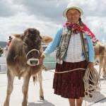 Espinar: potencian actividad ganadera de comuneros de Huayhuahuasi