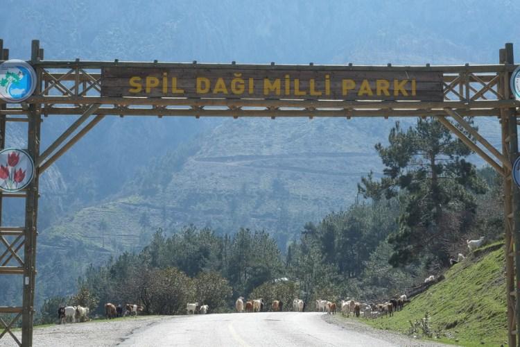Goats wandering nonchalantly into Spil Dagi National Park, western Turkey, March 2015.