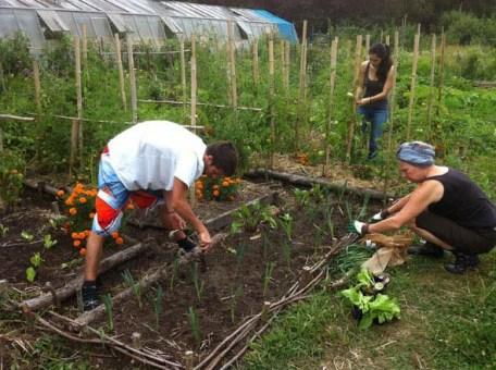 Réapprendre à jardiner à Bordeaux
