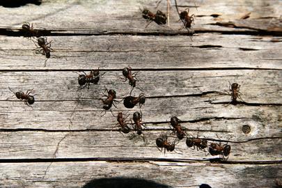 Les humains courent comme des fourmis laborieuses
