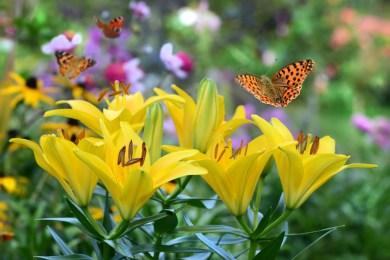 Les broussailles épineuses qui entourent le château où dort la Belle au Bois Dormant  se transforment en «belles et grandes fleurs épanouies».