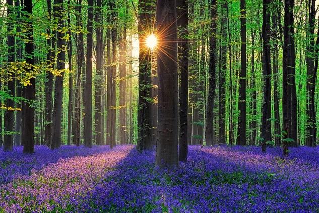 À la veille du printemps, la vie se prépare à renaître dans la Nature.