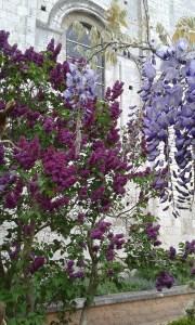 À chaque saison, il y a toujours une floraison de couleurs différentes.