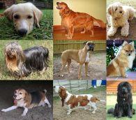 chacun verra dans sa tête un chien différent : pour l'un ce sera un petit chien, pour un autre un gros chien, pour l'un il sera gentil, pour un autre méchant, etc