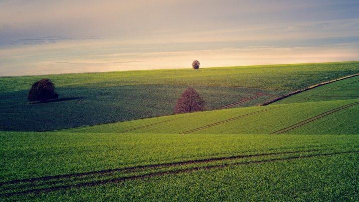L'agriculture française : une mort par les normes