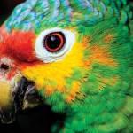 Fauna, Isla de Petencito —Javier Uclés