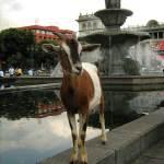 Parque Central —Gerardo Petzey