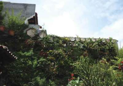 What do you do when your neighbor's new wall blocks your once-unobstructed view?