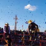 Feria finquera (Guatemala City) —Elisa Pineda