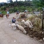 Cuchumatanes Adventure by Linda Green Roesch