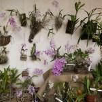 I Exposición Nacional de Orquídeas by Rudy Girón