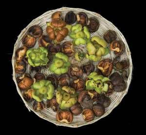 Edible Flowers in the Mayan Diet